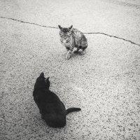 cats :: Вероника