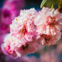 Весна.Ялта :: Юрий Пешков