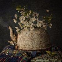 Весна старого чайника :: Ольга Мальцева