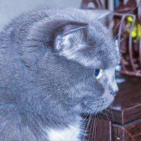 Соседский кот. :: Elena Izotova