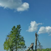 Летним днем :: Валерий Талашов