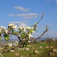 весна :: владимир Баранов