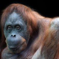 моя любимая обезьяна :: Михаил Бибичков