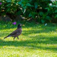 Важная птица,наверно скворец. :: Юрий Харченко