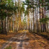 Апрельский лес. :: Александр Тулупов