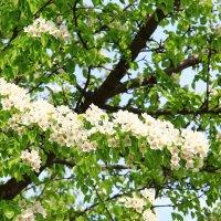 Весна :: Владимир Андреевич Ульянов