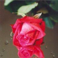 I love you............ :: Олег Дейнега