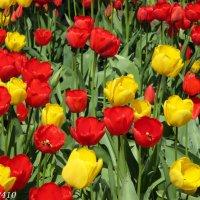 Разноцветный апрель :: Нина Бутко