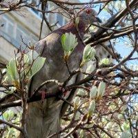 Весна пришла... :: Нина Бутко