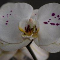 Мои любимые цветы :: Аллуся Сеник