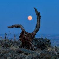 Moon Hunter :: Данил Ромодин