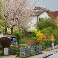 Буйство весны и её красок... :: Walter