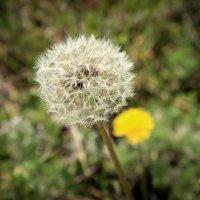Весение цветы :: Nataliya Oleinik