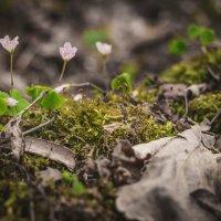 Цветы во мху :: Eugene B