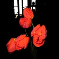 Свет в окне :: Наталья Джикидзе (Берёзина)