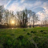 Весна,закат - болото, жабы!!! :: serg