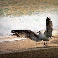 Раздайся море... :: ОЛЕГ ПАНКОВ