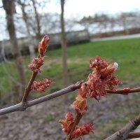 Весна :: laana laadas