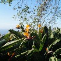 В Ботаническом саду Мадейры :: Natalia Harries