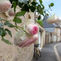 И день сиял, и млели розы, головки томные клоня, :: Татьяна Гладченко
