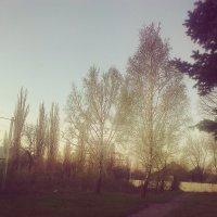 Вечерняя прогулка :: Valeriya Voice