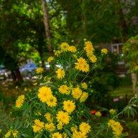 Цветы :: Марина Балашова