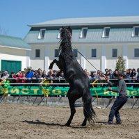 Выставка лошадей ... :: Vadim77755 Коркин