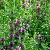 Апрельское цветение... :: Тамара (st.tamara)