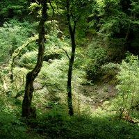 загадочный лес.. :: Ирина Лядова