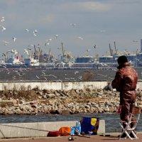 Залив,рыбак и чайки...и корюшка. :: Владимир Гилясев