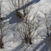 Сирень зимой :: Олег Афанасьевич Сергеев