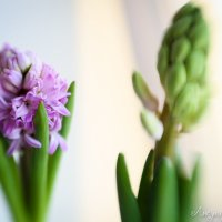 Весна :: Ася Нежная