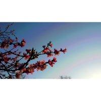 весенний свет :: Батик Табуев