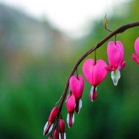 Весна идёт! :: Юрий Гайворонский