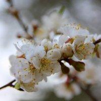 Весна пришла! :: Татьяна_Ш