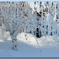 Белая зима. Все в инее. :: Людмила Богданова (Скачко)