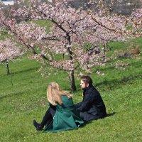 Когда цветёт сакура. :: Evgenij Schleinikov