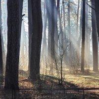 Лучистые апрельские туманы... :: Лесо-Вед (Баранов)