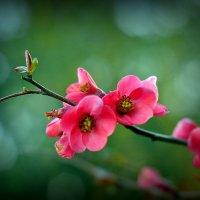 Весна. :: ОЛЕГ ПАНКОВ