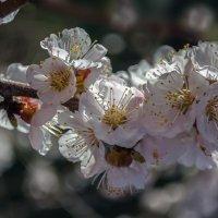 Апрель ликует красою первозданной ! :: Лидия Цапко