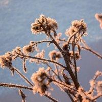 Зима... :: Яна Попова