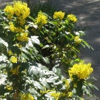 В Ботаническом саду... :: Тамара (st.tamara)