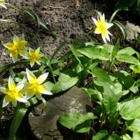 Цветы в Ботаническом саду... :: Тамара (st.tamara)