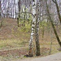 В весеннем лесу. :: Маргарита ( Марта ) Дрожжина