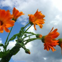 Голубое небо.Яркие цветы. :: Павлова Татьяна Павлова