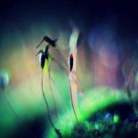 Пейзаж без солнца :: Ирина Сивовол