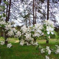 дичок возле леса... :: Галина Филоросс