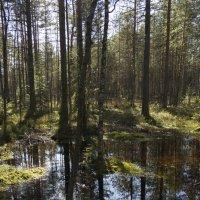 Лесное болотце :: Aнна Зарубина