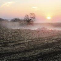 Курит облаком болото (2) :: Сергей Михайлович