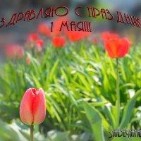 1 мая! :: Наталья (ShadeNataly) Мельник